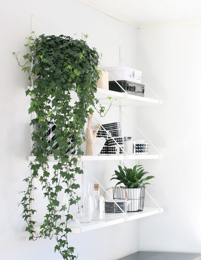 a-busy-girls-guide-to-greenery-at-home-1695824.640x0c
