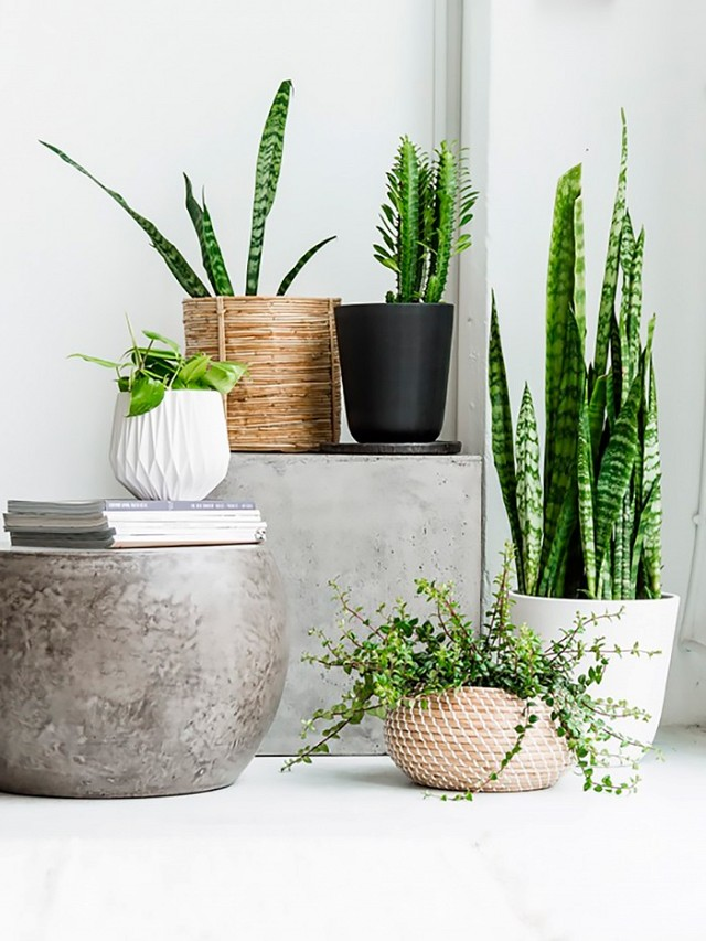 a-busy-girls-guide-to-greenery-at-home-1695826.640x0c
